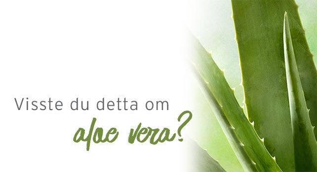 Visste du detta om aloe vera?